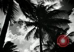 Image of coconut palms Puerto Rico, 1941, second 11 stock footage video 65675029922