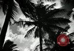 Image of coconut palms Puerto Rico, 1941, second 12 stock footage video 65675029922