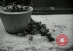 Image of snow in spring New York City USA, 1965, second 10 stock footage video 65675029927