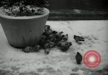 Image of snow in spring New York City USA, 1965, second 11 stock footage video 65675029927