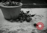 Image of snow in spring New York City USA, 1965, second 12 stock footage video 65675029927