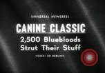 Image of dog show New York United States USA, 1966, second 1 stock footage video 65675029933