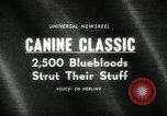 Image of dog show New York United States USA, 1966, second 2 stock footage video 65675029933