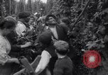 Image of hoppers of kent Kent England, 1915, second 12 stock footage video 65675029967