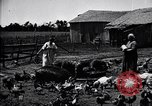 Image of pork packing United States, 1919, second 15 stock footage video 65675030037