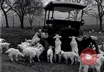 Image of lambs United States USA, 1919, second 6 stock footage video 65675030175