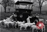 Image of lambs United States USA, 1919, second 9 stock footage video 65675030175