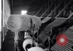 Image of refining raw cotton United States USA, 1922, second 11 stock footage video 65675030182