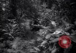 Image of lumbering operations Devil's Island French Guiana, 1939, second 5 stock footage video 65675030233