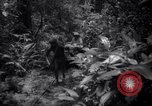 Image of lumbering operations Devil's Island French Guiana, 1939, second 7 stock footage video 65675030233