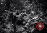 Image of lumbering operations Devil's Island French Guiana, 1939, second 8 stock footage video 65675030233