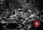 Image of lumbering operations Devil's Island French Guiana, 1939, second 9 stock footage video 65675030233