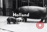 Image of hippopotamus Amsterdam Netherlands, 1954, second 1 stock footage video 65675030296