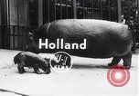 Image of hippopotamus Amsterdam Netherlands, 1954, second 2 stock footage video 65675030296