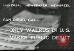 Image of walrus from Alaska San Diego California USA, 1932, second 1 stock footage video 65675030533