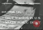 Image of walrus from Alaska San Diego California USA, 1932, second 2 stock footage video 65675030533