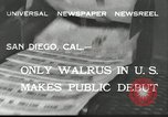 Image of walrus from Alaska San Diego California USA, 1932, second 3 stock footage video 65675030533