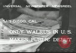 Image of walrus from Alaska San Diego California USA, 1932, second 4 stock footage video 65675030533