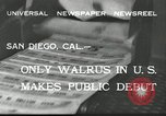Image of walrus from Alaska San Diego California USA, 1932, second 5 stock footage video 65675030533