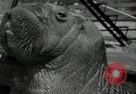 Image of walrus from Alaska San Diego California USA, 1932, second 11 stock footage video 65675030533