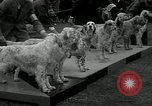 Image of Dog show Madison New Jersey USA, 1934, second 7 stock footage video 65675030596