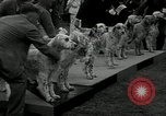 Image of Dog show Madison New Jersey USA, 1934, second 11 stock footage video 65675030596