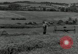 Image of farmer cutting old corn stalks Saint Clairsville Ohio USA, 1940, second 3 stock footage video 65675030603
