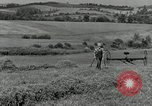 Image of farmer cutting old corn stalks Saint Clairsville Ohio USA, 1940, second 5 stock footage video 65675030603