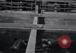 Image of hippopotamus New York United States USA, 1931, second 10 stock footage video 65675030768