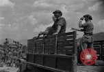Image of Korean War Taegu Korea, 1950, second 8 stock footage video 65675030827