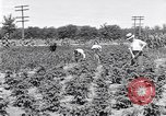 Image of Ford gardens Michigan United States USA, 1932, second 3 stock footage video 65675030998