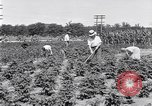 Image of Ford gardens Michigan United States USA, 1932, second 6 stock footage video 65675030998