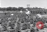 Image of Ford gardens Michigan United States USA, 1932, second 7 stock footage video 65675030998