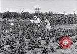 Image of Ford gardens Michigan United States USA, 1932, second 9 stock footage video 65675030998