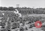 Image of Ford gardens Michigan United States USA, 1932, second 10 stock footage video 65675030998