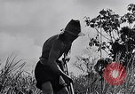 Image of Malayan settlement Malaya, 1959, second 7 stock footage video 65675031124