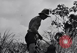 Image of Malayan settlement Malaya, 1959, second 8 stock footage video 65675031124