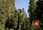 Image of Yosemite Valley Mariposa California USA, 1976, second 2 stock footage video 65675031133