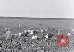 Image of grape harvest France, 1931, second 1 stock footage video 65675031149