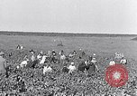 Image of grape harvest France, 1931, second 2 stock footage video 65675031149