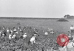 Image of grape harvest France, 1931, second 7 stock footage video 65675031149