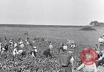 Image of grape harvest France, 1931, second 8 stock footage video 65675031149