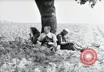 Image of German farmers Wiesbaden Germany, 1954, second 7 stock footage video 65675031787