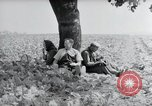 Image of German farmers Wiesbaden Germany, 1954, second 9 stock footage video 65675031787