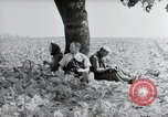 Image of German farmers Wiesbaden Germany, 1954, second 11 stock footage video 65675031787