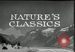 Image of Film Nature's Classics United States USA, 1920, second 12 stock footage video 65675031985