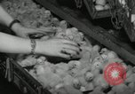Image of chicken hatched New Brunswick New Jersey USA, 1941, second 7 stock footage video 65675032025