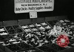 Image of chicken hatched New Brunswick New Jersey USA, 1941, second 11 stock footage video 65675032025