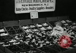 Image of chicken hatched New Brunswick New Jersey USA, 1941, second 12 stock footage video 65675032025
