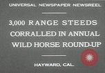 Image of annual wild horse round up Hayward California USA, 1930, second 4 stock footage video 65675032154
